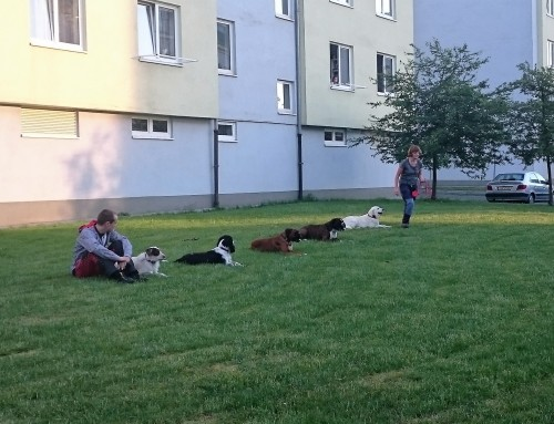 Úterní skupinový výcvik