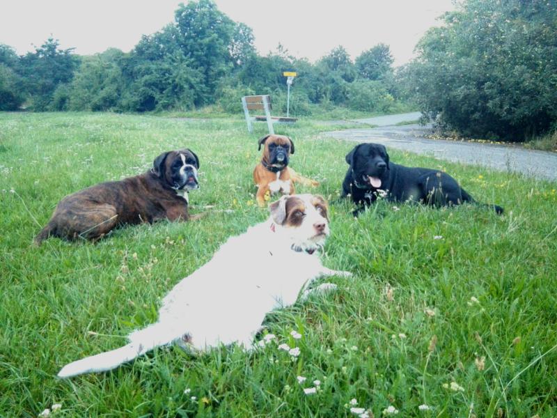 City Dog - výcvik psů