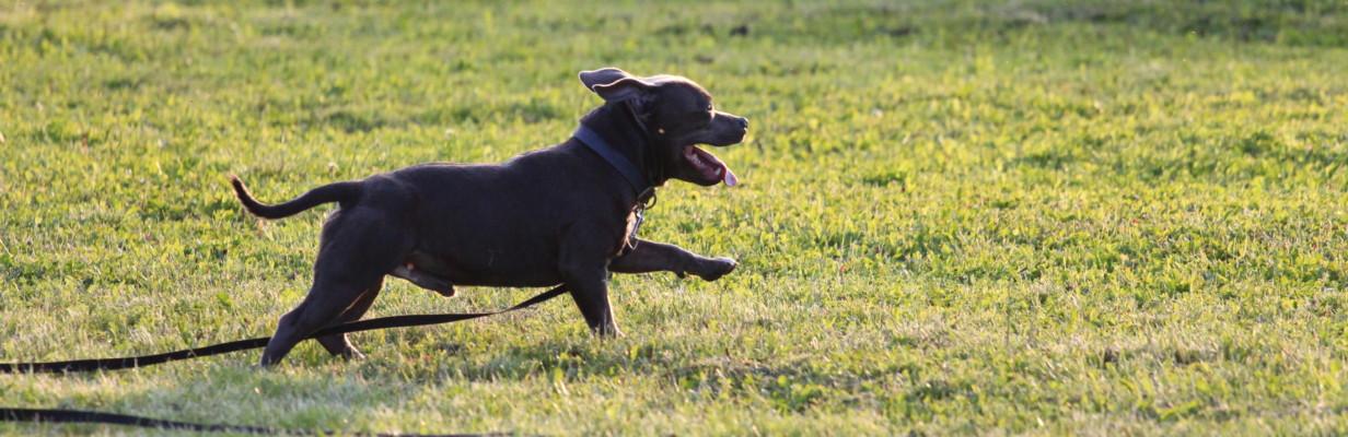 City Dog - Individuální výcvik psů